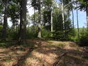 Neostrá hranice čistého lesa a bukového houští ve Smutném žlebu.