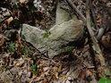 Kámen na slunečním ostrůvku v lese.