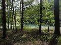 Pohled přes kraj lesa a louku dolů k silnici.