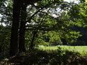 Dvojice dubů na okraji lesa.