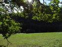 Podzimní Slunce má stále sílu i za dubovou větví nad loukou.