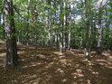 Listnatý les v jižní částí chráněného území Sokolí skála.