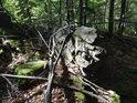 Skalka v lese a na ní povalené padlé bukové větve.
