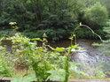 Chmel otáčivý se již nemá kolem čeho otáčet a řeka Svratka si klidně plyne dál.