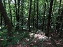 Fádní lesní sráz.