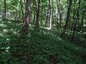 Les s bylinným patrem.