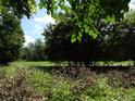 Pohled z kraje lesa přes popadané uschlé větve na silnici Stupava – Koryčany.
