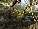 Vrby k mokřadu patří, jak keře, tak i stromy.
