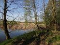 Břehy rybníka Štěpán jsou zpevněny jasany, vrbami a břízami.