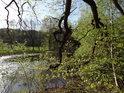 Laguna pod východní hrází rybníka Štěpán.