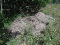 Původně navezená oschlá tráva na hromadě hnije.