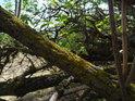 Lišejníky žijí na mrtvých větvích.