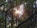 Průsvit Slunce přes lužní větve.