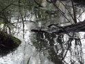 Bobří soutěska mezi padlými stromy.