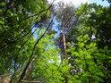 Smíšené lesy jsou odolné, zde můžeme spatřit jeřáb, dub a borovici.