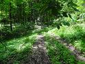 Cesta přes lesní část chráněného území Strabišov-Oulehla.