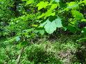 Nové listy ještě svojí zelení nestačily zcela zakrýt pozůstatky po zimě.