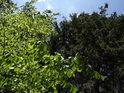 Kontrast přechodné jasné zeleně bukové oproti temné a stálé zeleni smrkové.