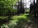 Sluncem osvětlený zelený palouk v lese.