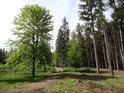 Lesní cesta ke Strádovu.