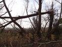 Zlomená vrba u vodoteče na jih od chráněného území.