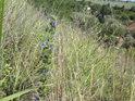 Vesnička Chroustov leží stulena mezi kopci u říčky Výrovky