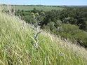 Pohled přes Chroustov na alej z Radimi na Vrbčany, na pravém okraji pšeničného pole před onou alejí začíná horní část přírodní rezervace Stráně u splavu