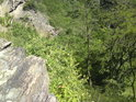 Mladé stromy lehce napovídají o výškových poměrech
