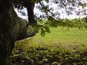 Tvar bukových větví dokresluje romantické pohledy.