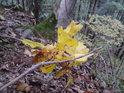 Mladý dub si hledá své místo na Slunci.