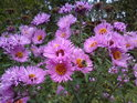 Květinový pohled asi čmeláka tolik nedojímá, ale ještě se snaží.