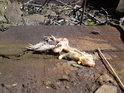 Ne vždy se žabám podaří přejít, či přeskákat trať, ale smrt patří k životu, jako život ke smrti...