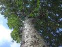 Pohled do koruny stromu dává člověku naznačit, jaký je malý.