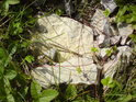 Plazivé jahodníky přerůstají volně pohozené zbytky kdysi těženého kameniva.