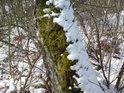 Stromy často hostí mechy a sníh, aniž se jich někdo ptá.