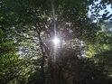 Průnik Slunce listy javoru, vzadu je vidět kolmá skála.