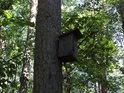 Osamělá ptačí budka na kmeni borovice.
