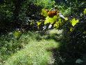 Málo používaná lesní cesta ve Stupavě.