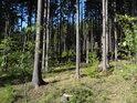 Smrkový les v jihovýchodním cípu chráněného území.