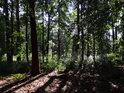 Les mezi skalami a silnicí.