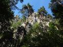 Borovice pod Suchými skalami.