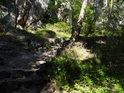 Kamenné schody do Suchých skal.