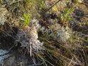 Roztodivná květena chráněného území Švařec.