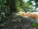 Pročištěný pravý břeh řeky Svratky v chráněném území Svratka v sousedství ječného lánu.