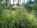 Lesní traviny pod Tisůvkou.