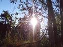 Traviny a mladé stromky na vrcholu Tisůvky.