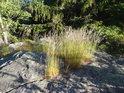 Trs trávy žije na východním vrcholu Tisůvky.
