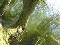 Vrbový posed, právě tak akorát pro vodníka.
