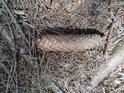 Padlá smrková šiška na vzácném slunečním světle v lese.