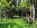 Malý mokřad u lesa.